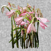 Feature Easter lilies on gray canvas