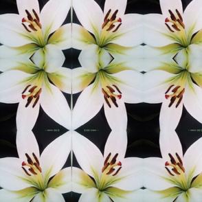 crealani lily
