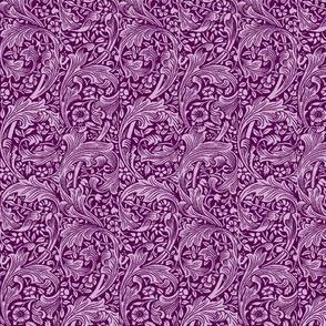 Plumes Purple
