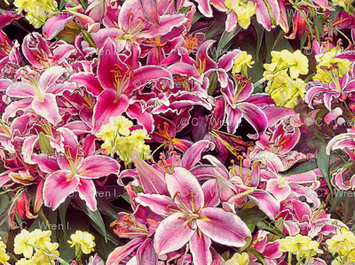 Rubrum Lilies and Narcissus