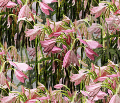 Rrv4b-amalg-easter-lilies-on-gray-canvas-12x12_comment_435296_thumb