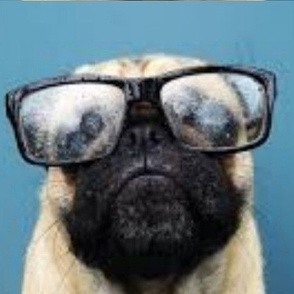 pug_in_glasses-ed-ed