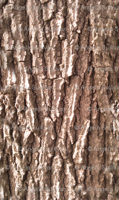 Oak Tree Bark Nature Theme
