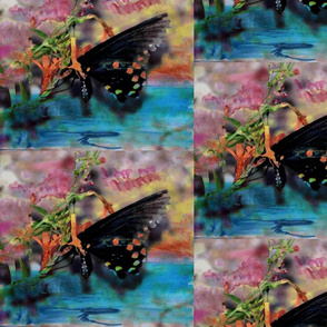 Butterfly_2_pe