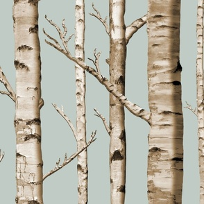 Birch Grove in Overcast