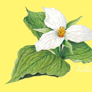 TRILLIUM SIGNATURE PILLOW