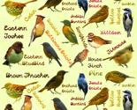 Rreastern_birds_thumb