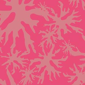 Coral Mono