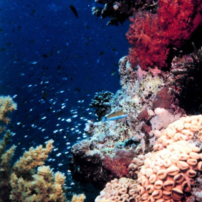 reef2014_big