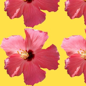 Hibiscus_II centered
