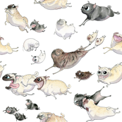 Pugs on the run!