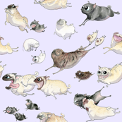 Pastel Purple Pugs on the Run!