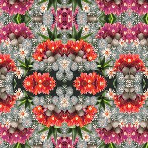 cacti mix 4