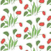 sassy venus flytrap