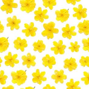 Flowering #8