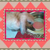 Baby Bunny Biscuit