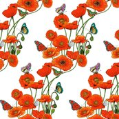 Orange_poppies_on_white_shop_thumb