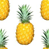 Pineapple_-_small_repeat_shop_thumb