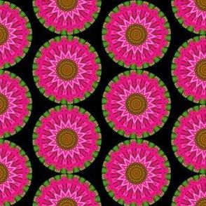 Echinachea 2