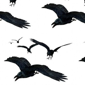 As the Crow Flies