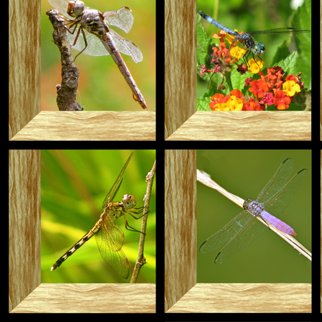 Attic Window Dragonflies