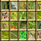 Attic Window Dragonflies