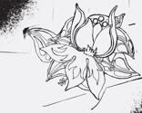 taybird