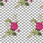 Rose_with_a_checkered_past_grey_shop_thumb