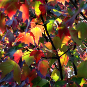 AutumnLeaves2