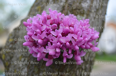 purple flowers on bark