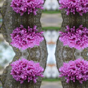 purple flowers on bark