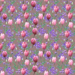 Tulips_altrosa