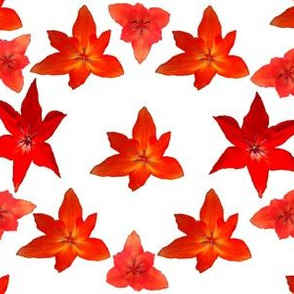 Just_red_tulips_a