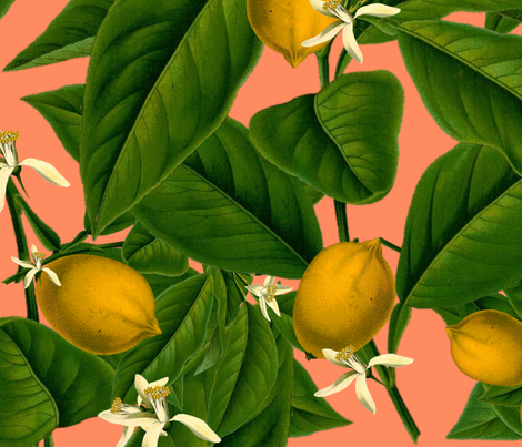Lemon Botanical ~ Kiss Me, Hardy!