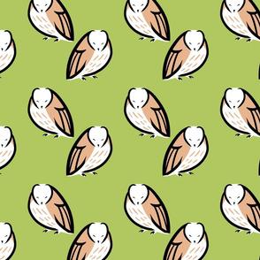 Sweet Green Barn Owls