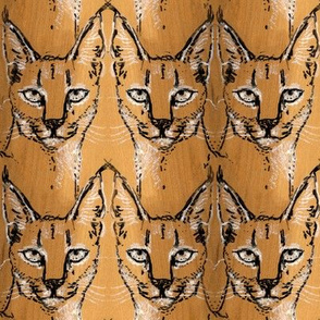 Maple Caracal