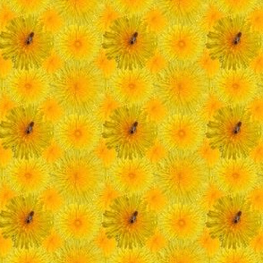 Dandelion_with_1_bee