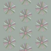 Multi-Coloured Daisy Nature