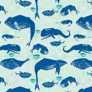 The sound of Albin's whales, blue