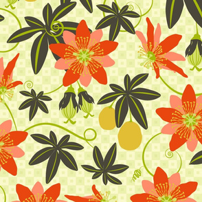 Vibrant Passiflora