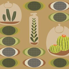 Cactus Terrariums