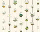 Rhanging_terrariums_thumb