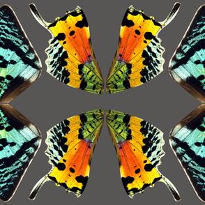 Medium Sunset Moth Costume Wings