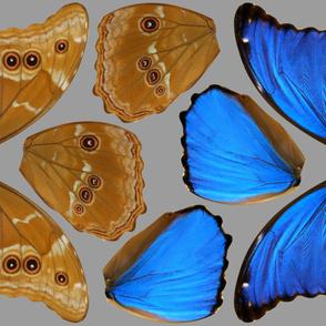 Medium Blue Morpho Butterfly Wings