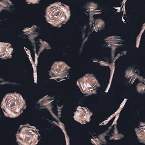Roses - 5