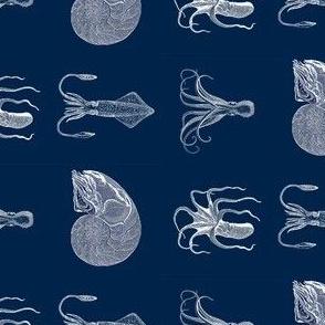 cephalopod family