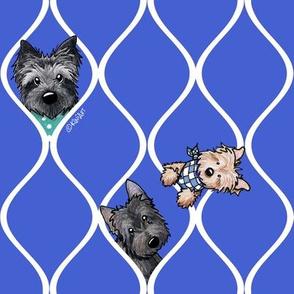 Peekaboo Cairn Terriers