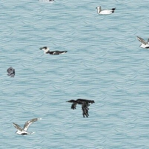 British Sea Birds
