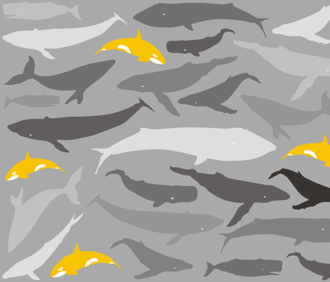 Whale shade of grey and yellow