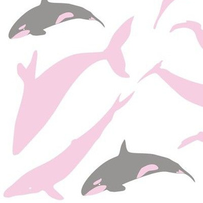 Whale grey pink on white